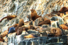 Abel Tasman Sea - Seals Relaxing And Sunbathing On Rock