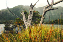 Cradle Mountains And Lake Dove. Cradle Mountain National Park. T