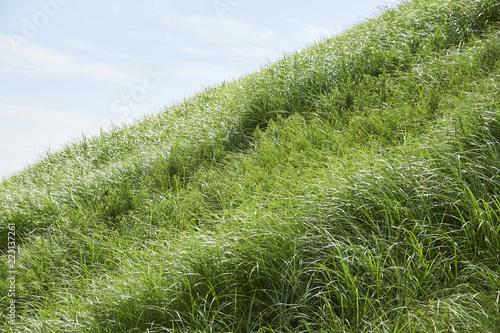 Fotografie, Obraz  急斜面の芝生