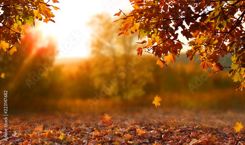 Fototapeta Beautiful autumn landscape with. Colorful foliage in the park. Falling leaves natural background obraz