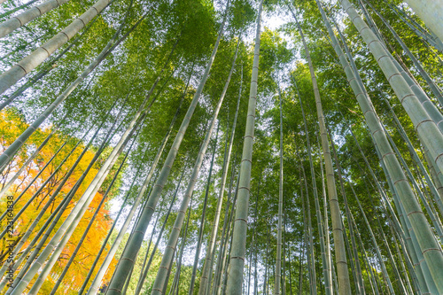 Foto op Plexiglas Bamboe Japanese bamboo forest in autunm at arashiyama kyoto japan