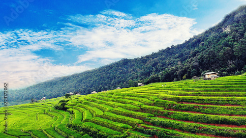 Aerial view of Rice field at Pa Bong Piang village in the valley on Doi Inthanon National Park, Chiang Mai, Thailand.
