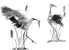 Two Enamored Japanese Cranes Bird. Watercolor And Ink Illustration In Style Sumi-e, U-sin, Go-hua Oriental Traditional Painting. Isolated .