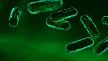 Green Bacteria Or Microbe