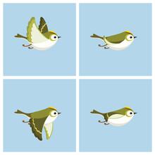 Flying Goldcrest (male) Animat...