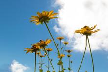 Under Yellow Wildflowers