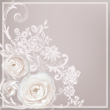 Ranunculus, Flowers For Your Design On Lace Background