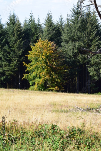 In de dag Khaki Herbstbäume