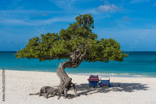 фотография A tree near the shore of an idyllic beach