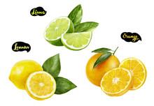 Lemon Lime Orange Watercolor Hand Drawn Illustration Set
