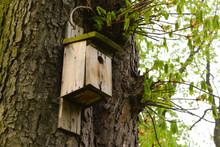 Stara Budka Dla Ptaków W Parku