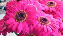 Różowe Gerbery, Bukiet Kwiatów