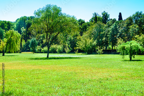 Photo sur Aluminium Vert chaux Meadow with trees