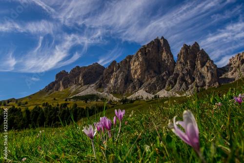 Herbstzeitlosen Vor Dolomiten Buy This Stock Photo And Explore