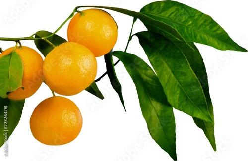 Fotografie, Obraz  Ripe oranges on a branch