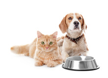 Cute Cat And Dog Together On W...
