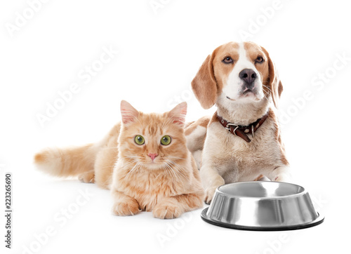 Cute cat and dog together on white background. Best friends