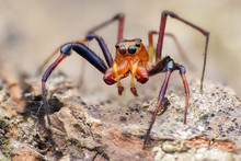 Close Up Of Jumping Spider Crawling On Rock
