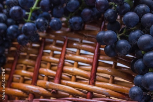 Fotografia  Cultivation and harvesting of grapes.