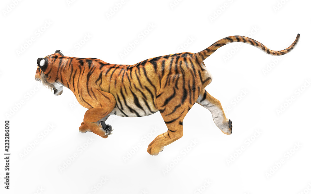 3d Illustration Dangerous Bengal Tiger Roaring and Jumping Isolated on White Background with Clipping Path.