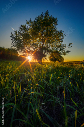 Photo Stands Landscapes Nature landscape scene at sunset with the sun behind a tree and grass in the foreground