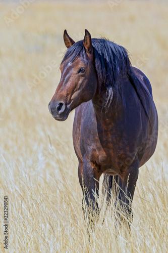 "Fotografie, Obraz  ""Stallion In Gold"""