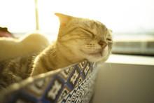 Cute Cat Sleep On A Window Sill