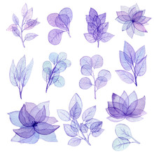 Set Of Watercolor Transparent Flowers And Leaves