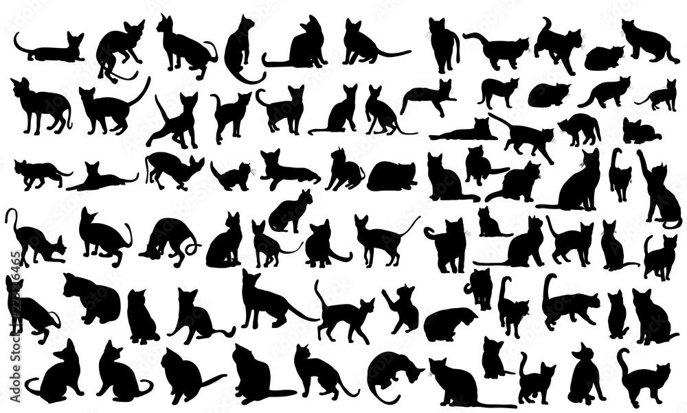 Fototapeta  silhouette of a cat, set