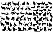 Silhouette Of A Cat, Set