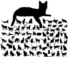 Cat Silhouette On White Background, Set