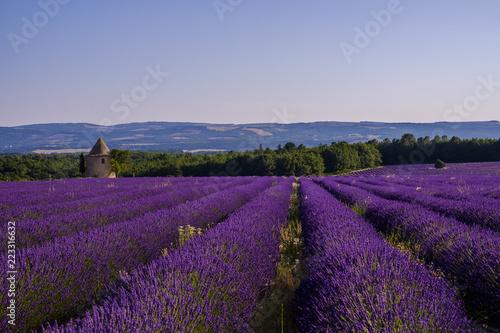 Tuinposter Lavendel Champ de lavande en Provence. Pays de Sault.