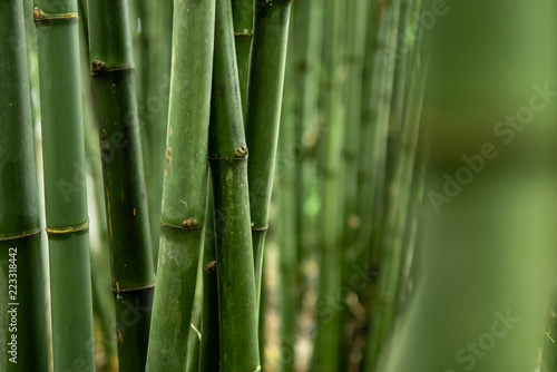 In de dag Bamboo Green Bamboo Forest Background