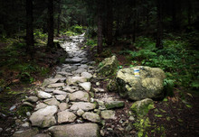Stone Walkway In The Dense For...