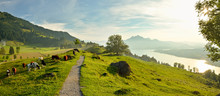 Panoramic View On Beautiful Lake Lucerne In Switzerland