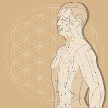 Akupunkturmodell Mit Lebensblume