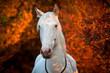 Pferd vor leuchtenden Büschen