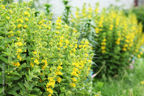 Green grass and small yellow flowers in meadow