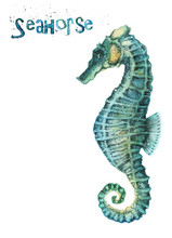 Watercolor Seahorse Isolated O...