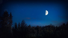 Dark Forest Night With Bright Big Moon And Stars - Beautiful Landscape Background