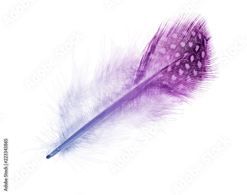 colored straight feather in light spots isolated on white