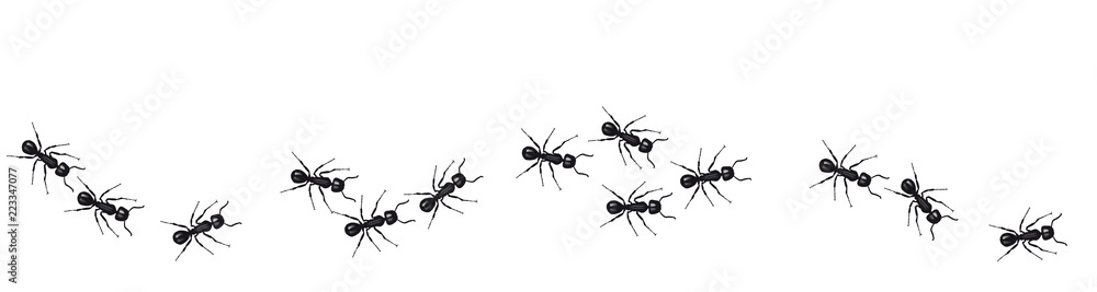 Fototapeta A line of worker ants marching in search of food. Vector banner