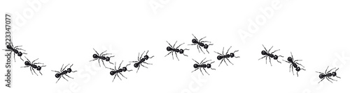 Fotografía  A line of worker ants marching in search of food. Vector banner