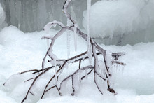 Tree Branches Frozen In The Ic...