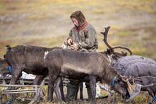 Tundra, Open Area, Assistant Reindeer Breeder,  The Men  In National Clothes