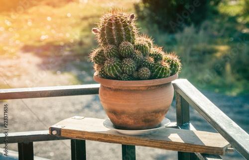 Tuinposter Cactus Details of tne cactus in sunlight