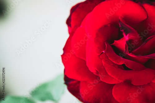 Image D Une Rose Rouge close up sur le coeur d'une rose rouge - buy this stock photo and