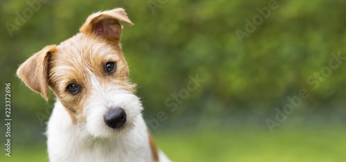 Spoed Foto op Canvas Hond Funny head of a happy cute jack russell puppy pet dog - web banner idea