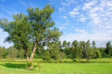 Fototapeta beautiful rural landscape
