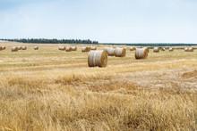 Freshly Cut  Hay Crammed Into ...
